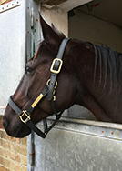 Charlottenlund Travbane hestevæddeløb