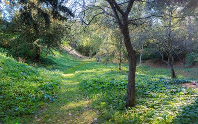 Rundt i kommunen med borgmesteren – En kirkegård anlagt som en naturoplevelse