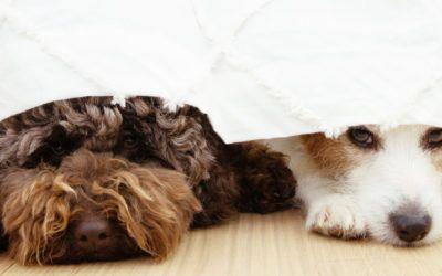 Er din hund bange for fyrværkeri?