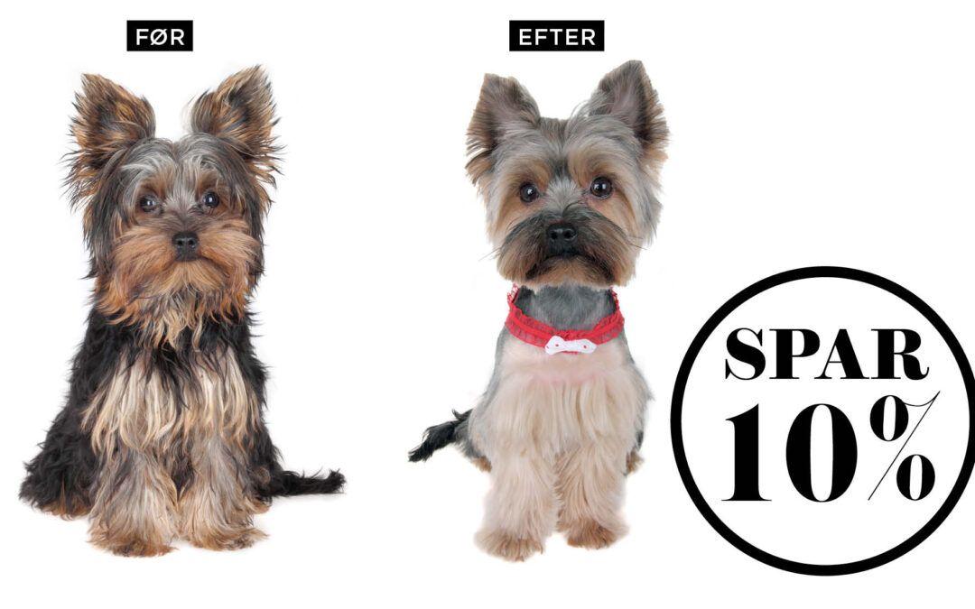 NORD Deal – Vask, spa, klip til din hund